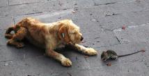 Köpeğin fare ile oyunu şaşırttı!
