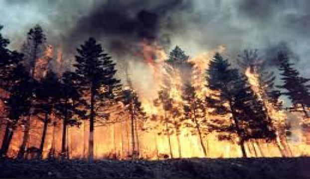 ABDde orman yangını: 3 ölü