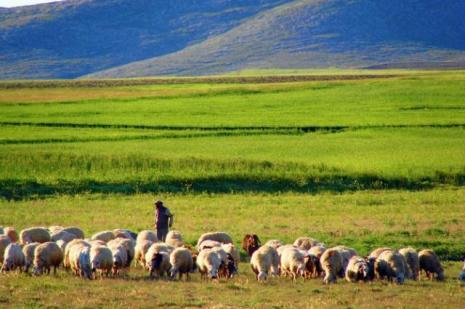 Sertifikalı çobanlar geliyor